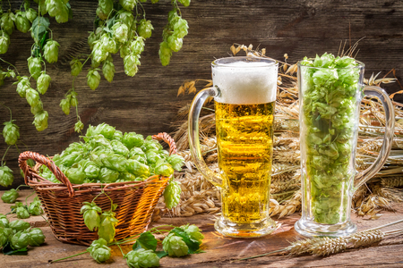 Harvest hops and wheat for fresh homemade beer Stock Photo - 22586189