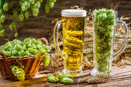 Ears of wheat in gold surrounded by fresh beer hops photo