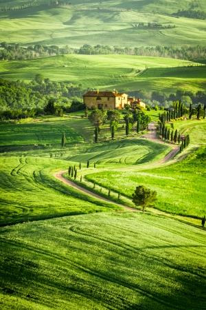 san quirico: Spring fields and meadows in Italy