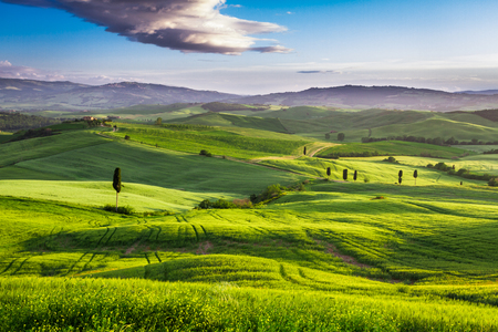 san quirico d'orcia: Green valley at sunset in Tuscany Stock Photo