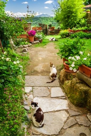 Cats in ancient garden, Italy photo