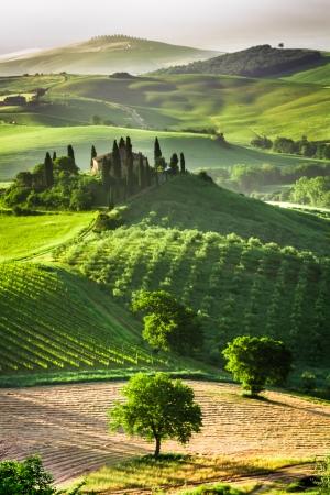 Boerderij van olijf-en wijngaarden Stockfoto