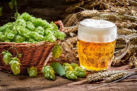 Small beer with a large foam surrounded by hops Zdjęcie Seryjne - 25159685