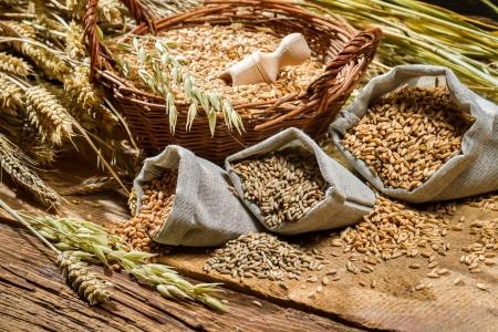 Verschiedene Arten von Getreidekörnern mit Ohren Standard-Bild