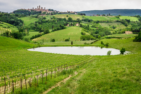 Field of grapes on a pond in Italy photo