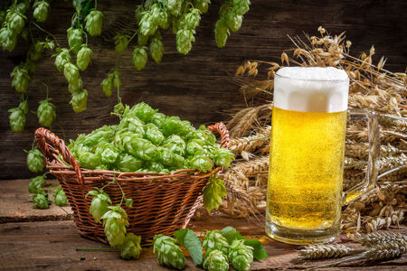 Basket full of hops and a cold beer photo