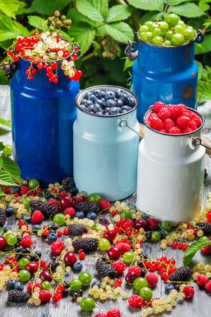Raccolta di frutti di bosco freschi