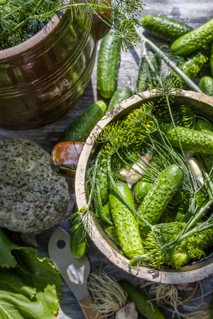 pickling: Pickling low-salt cucumbers in a clay pot Stock Photo