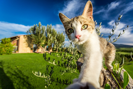 Curious cat in the countryside, Tuscany Stock Photo - 29070843