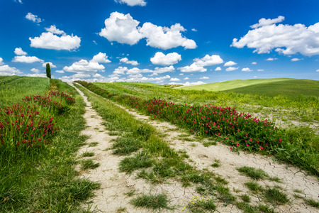 san quirico d'orcia: Country road between green hills Stock Photo