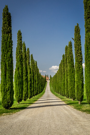 Agritourism in Tuscany with cypresses path photo