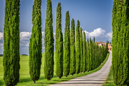 Road to agritourism in Tuscany with cypresses photo