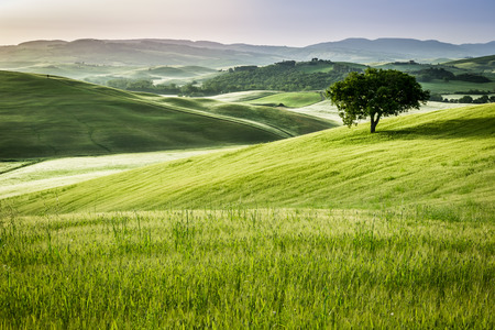Sunrise over the green fields in Tuscany photo