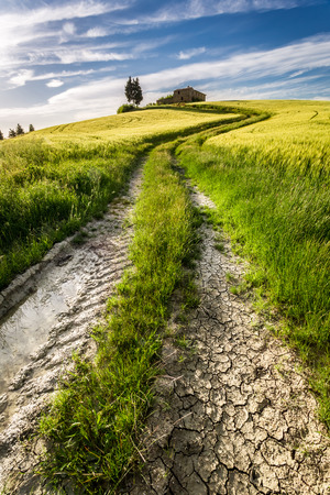 Gold and green fields in the valley at sunset, Tuscany Stock Photo - 29163641