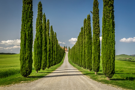 san quirico d'orcia: Agritourism in Tuscany with cypresses path Stock Photo