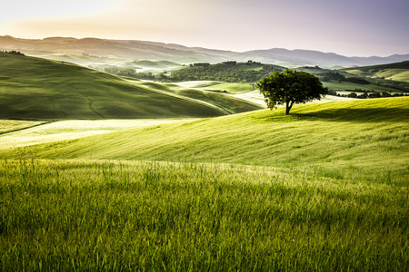 agriturismo: Sunrise over the green fields in Tuscany