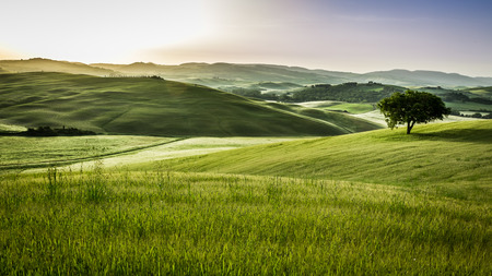 san quirico d'orcia: Sunrise over the green fields in Tuscany