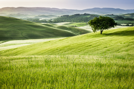 field: Sunrise over the green fields in Tuscany