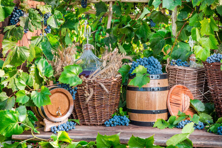 Grape harvest in a village photo