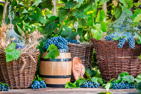 red oil lamp: Grapes and red wine in a wicker basket