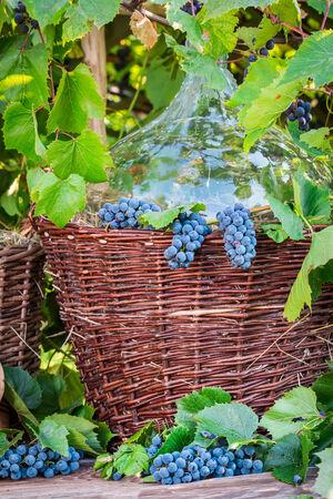 Demijohn in a wicker basket and dark grapes photo