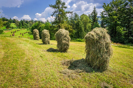 haymaking: Mountain haymaking in the fields Stock Photo