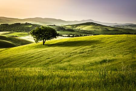 朝は、トスカーナの霧の草原 写真素材