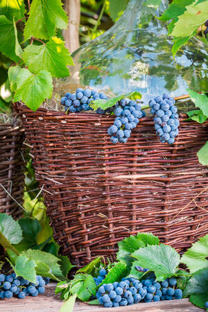 red oil lamp: Grapes in a wooden barrel and a wicker basket Stock Photo
