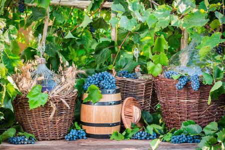demijohn: Demijohn in a wicker basket and dark grapes