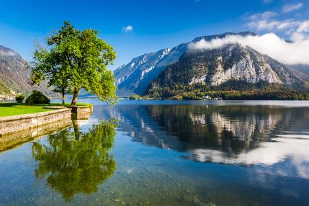 Single tree on a background of mountains in Hallstatt photo