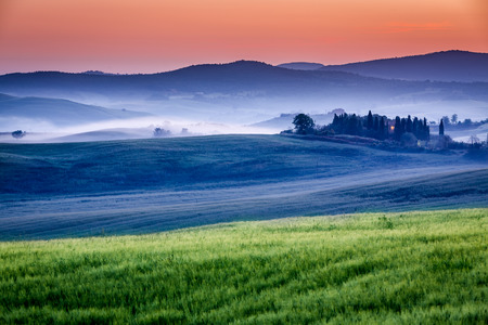 olive groves: Farm of olive groves and vineyards in foggy sunrise