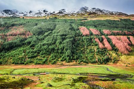 typically scottish: Argyll Forest Park, Highland in Scotland