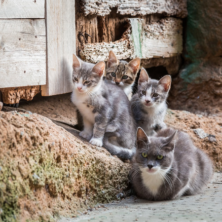 Homeless kittens with mom in Tuscany Imagens - 33268253