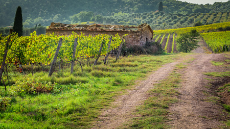 Farm of vineyards in Tuscany photo