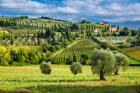 Olive trees and vineyards in a small village in Tuscany