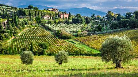 Vineyards and olive trees in a small village, Tuscany Stock Photo