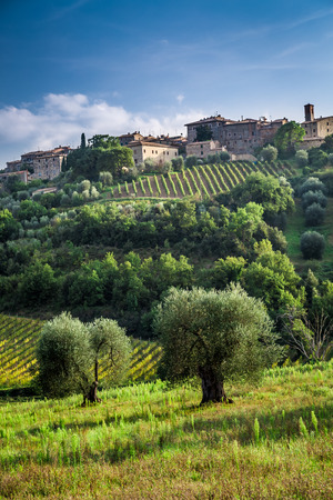 montalcino: View of a small town with vineyards and olive trees