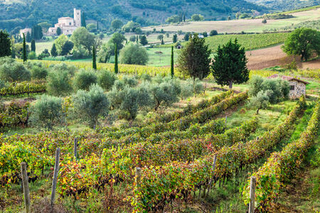 Beautiful view over the vineyards in Tuscany photo