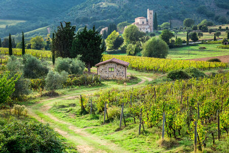 agriturismo: Country road leading to the monastery through the vineyards Stock Photo