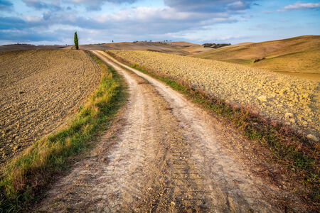 Dirt road between brown fields in Tuscany photo