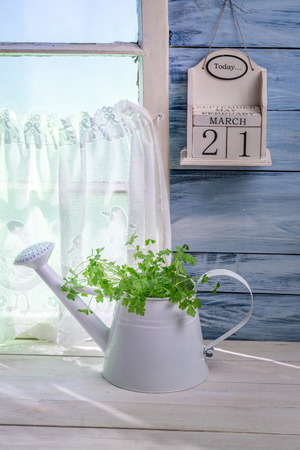 emaciated: Watering standing with herbs in sunny kitchen