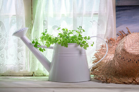 lite food: Watering can full of fresh herbs in the kitchen
