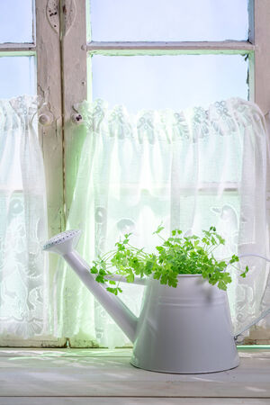 lite food: Watering can standing in a sunny window with herbs Stock Photo