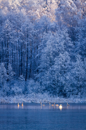 Winter frozen lake and forest at sunrise photo