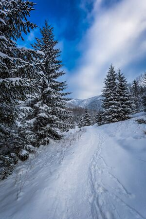 snow capped mountain: Snow capped mountain path between the trees