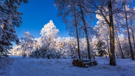 Frozen forest at dawn in winter photo