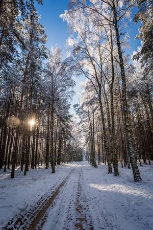 natue: Frozen winter forest in full sunlight