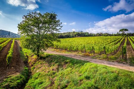 agriturismo: Beautiful view of the vineyards in Tuscany