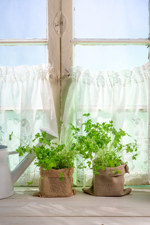 lite food: Fresh herbs near old rural window