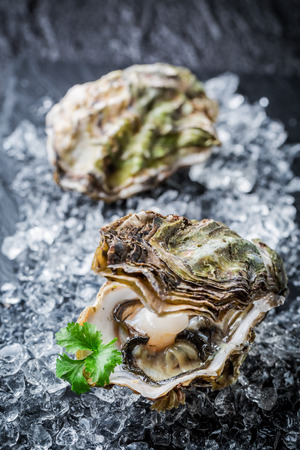 Tasty oyster in shell on crushed ice